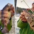 【デカメバルほか根魚連発!】水野浩聡が三重県答志島でお手軽ライトゲームを満喫