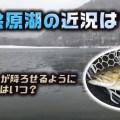 桧原湖(福島県)の現在の状況と春先のオススメのルアーとロッドについて!