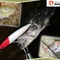 【バスデイの独自技術を惜しみなく採用】多くの魚種が狙える!バスデイ「GYOKUSAI 135F 玉砕」を駆使した実釣レポートに注目!