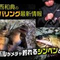 【豊西和典の最新メバリングレポート】メバルがめちゃ釣れるシンペンについて語ります