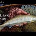 天龍・レイズ&レイズスペクトラで渓流ルアー!実釣動画が公開