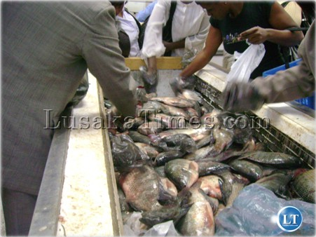 Inside one of Lusaka's Fish markets