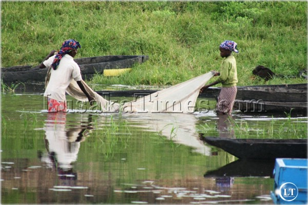 FILE: Two women using a mosquito net to catch fish in Mongu. It is illegal to fish using a mosquito net