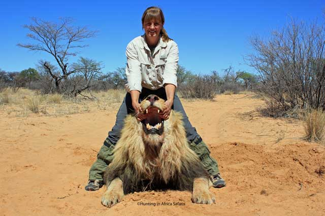 trophy-hunting-lions-in-africa-with-hunting-in-africa-safaris