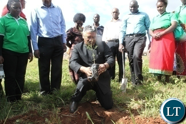 Agriculture Minister Given Lubinda positioning himself to plant an acacia tree to flag off the Hope Lilayi Women's club tree planting initiative in Lusaka's Lilayi Area