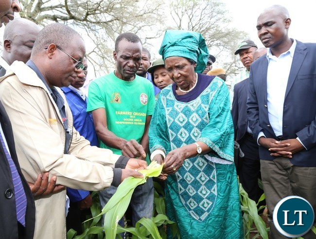 Vice President Mrs Inonge Mutukwa Wina flanked by Lusaka Province Minister Japhen Mwakalombe (r) being explained by Headman Gibson siti (l) during the tour of fields affected with Army worms in Chongwe District