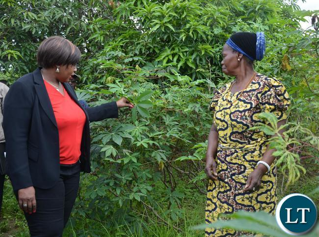 """Minister of Agriculture Dora Siliya(l) admiring the Cassava plant when she toured Melania Chipungu(r)""""s Farm in Ibex Hill Extension"""