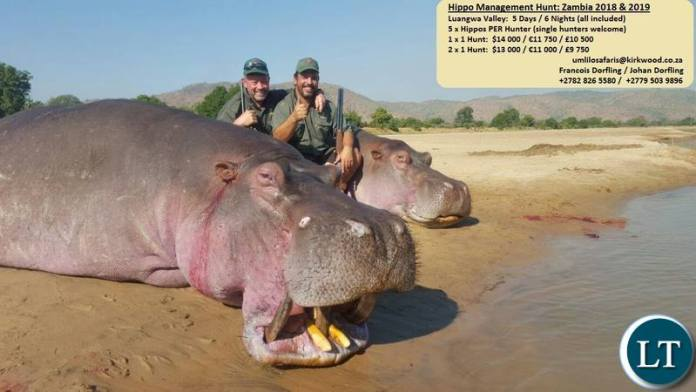 Umlilo Safaris advertisement for Hippo Hunting