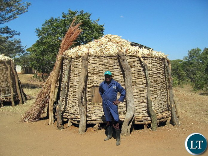 Zambian Peasant Farmer standing in Front of his Maize harvest