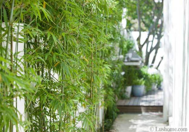 Plants Bamboo Mature