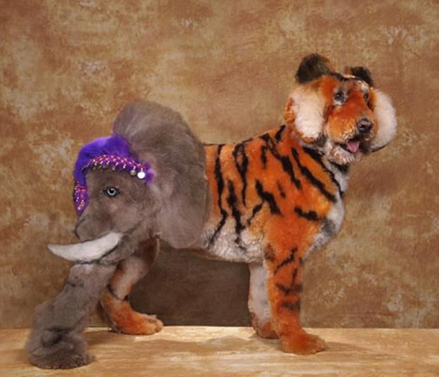 10 Fantastic Pets Grooming Designs The Amazing Art Of Fur