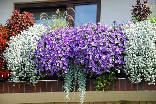 Ideas Bed Landscaping Flower Petunia