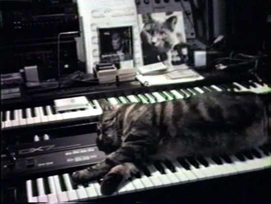Image result for Chat écoutant la musique
