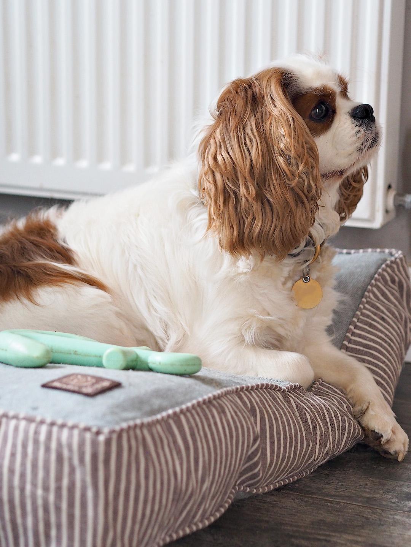 Danish Design Dog Bed