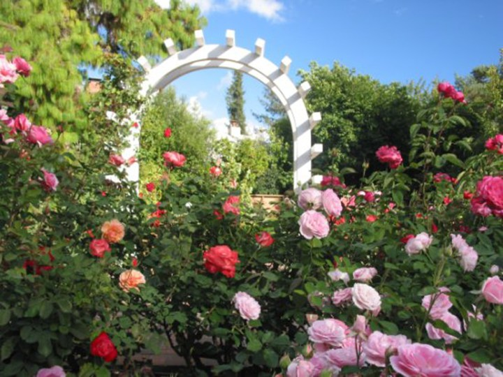 Rose Garden at Luther Burbank Home & Gardens