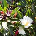 December Blooms