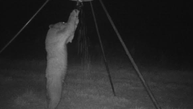 Photo of A Bear in Luther