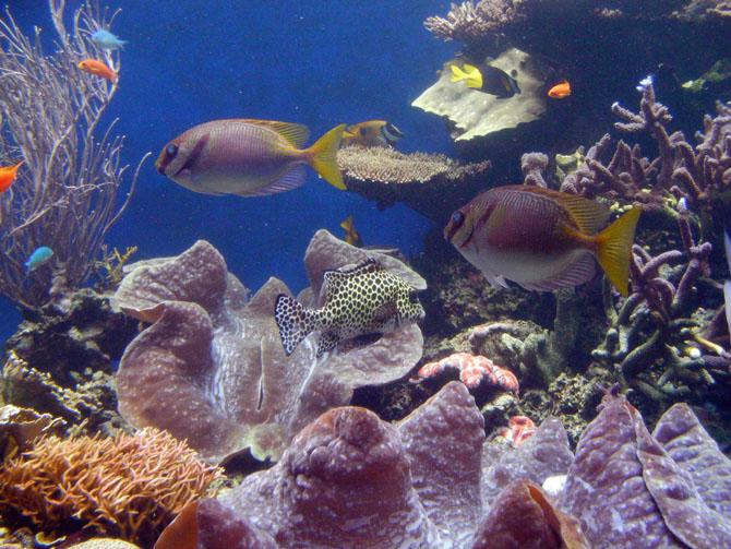 Top 10 Sightseeing Attractions in Honolulu Waikiki Aquarium