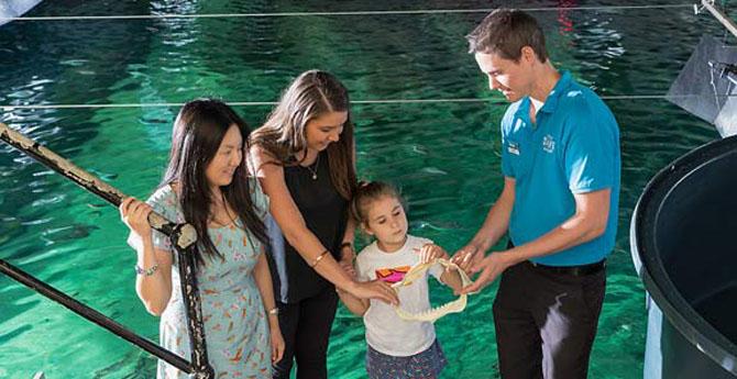 Top 7 Family Activities in Sydney Sydney Sea Life Aquarium
