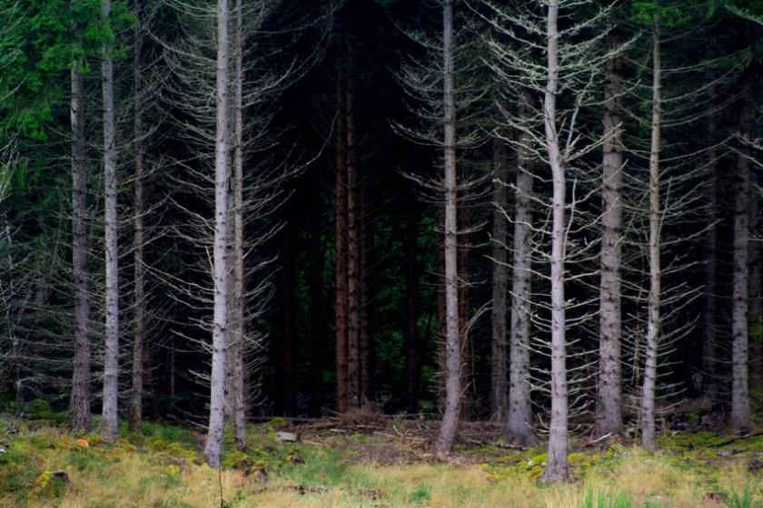 Fangorn Forest New Zealand
