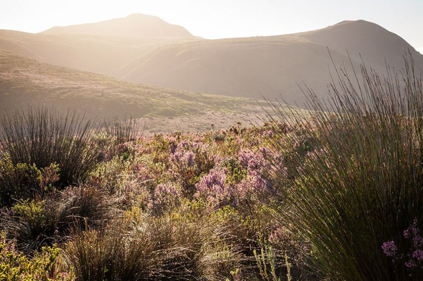 Grootbos Private Nature Reserve South Africa 3