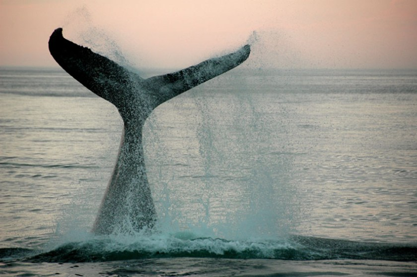 New Zealand Wine and Dine Escapes Whale watching Kaikoura