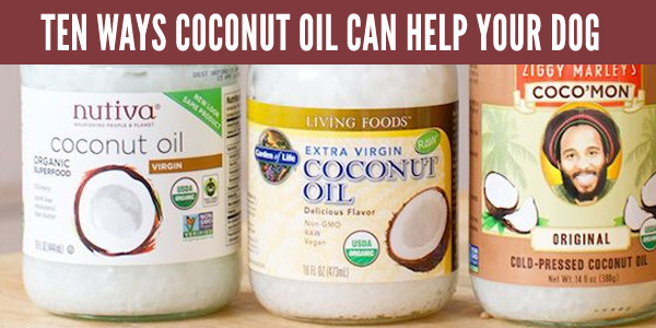 dog caring tips - coconut oil