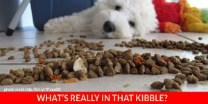 January2016_kibble