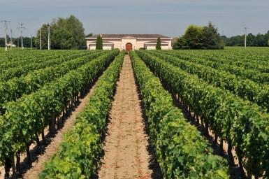 3. Chateau Grand Ormeau - vignes