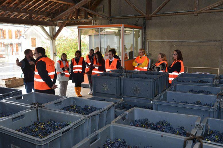 Vendanges Veuve Clicquot - photo Michel Jolyot (287)