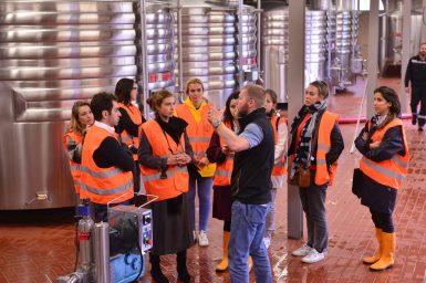 Vendanges Veuve Clicquot - photo Michel Jolyot (305)