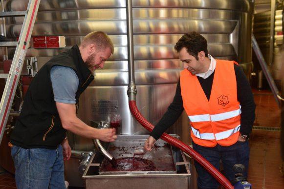 Vendanges Veuve Clicquot - photo Michel Jolyot (318)