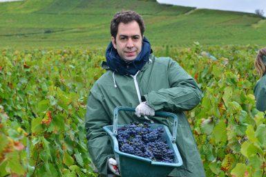 Vendanges Veuve Clicquot - photo Michel Jolyot (54)