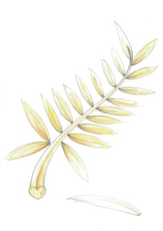The Palme d'Or sketch (1)
