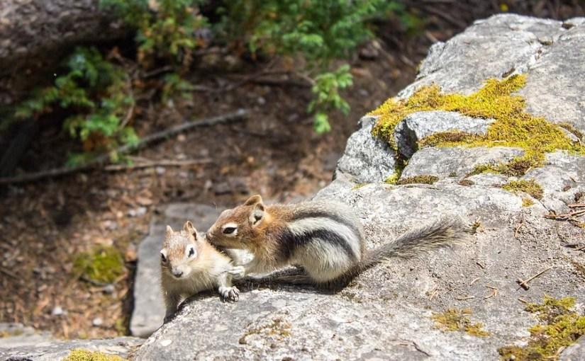 Johnston Canyon – The Beautiful Banff National Park