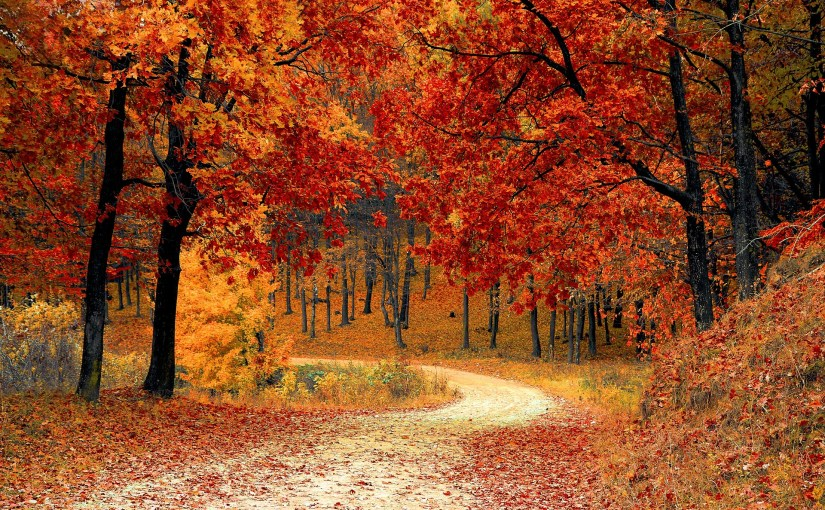 Fall-Forest