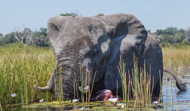 Botswana is one of the world's last great unspoilt wildernesses, with parched sands and lush savannah.