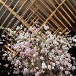 Sakura At Sake No Hana 7