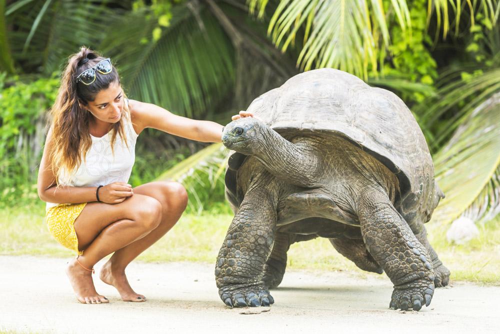 Get close to nature at Alphonse Island Resort