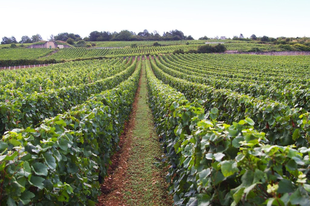 Domaine de la Romanée-Conti vineyard