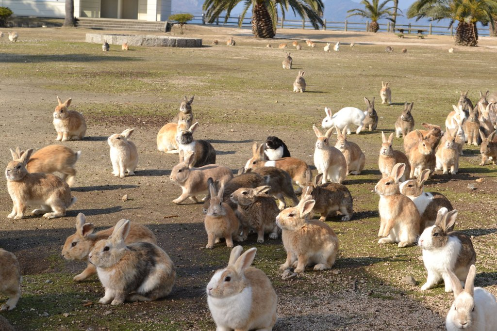 Rabbits on Okunoshima Island, Hiroshima, Japan