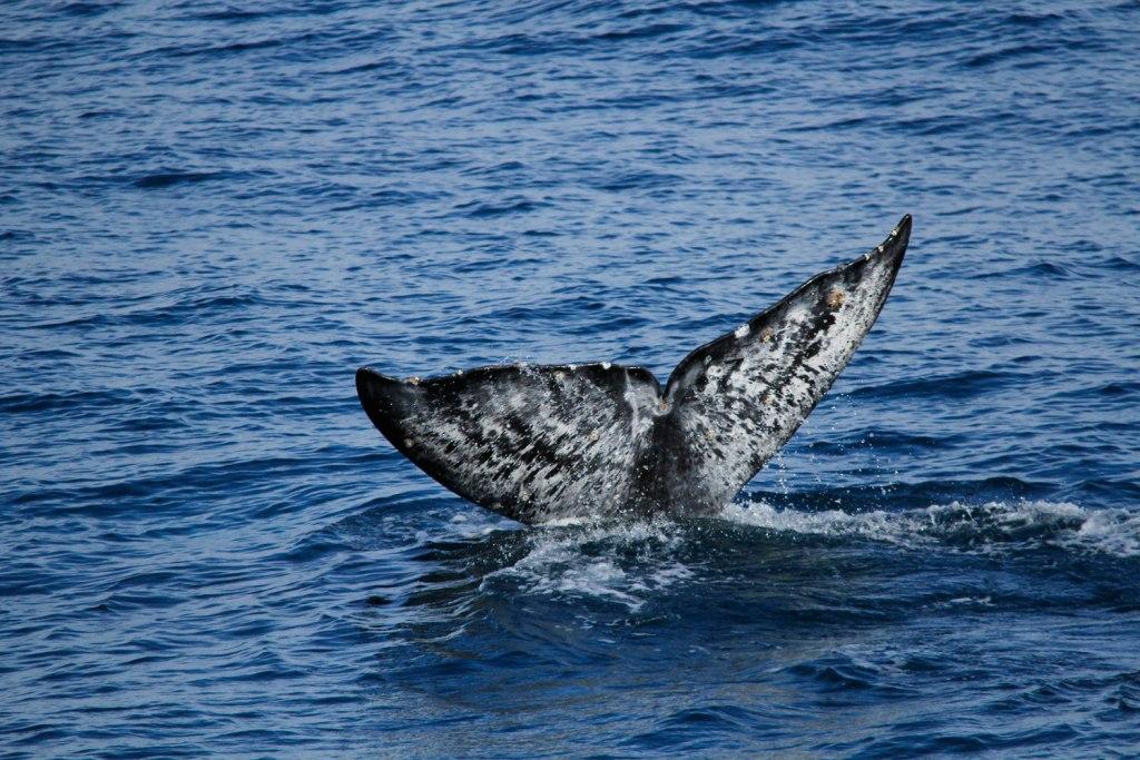 Whale watching – Dana Point, California