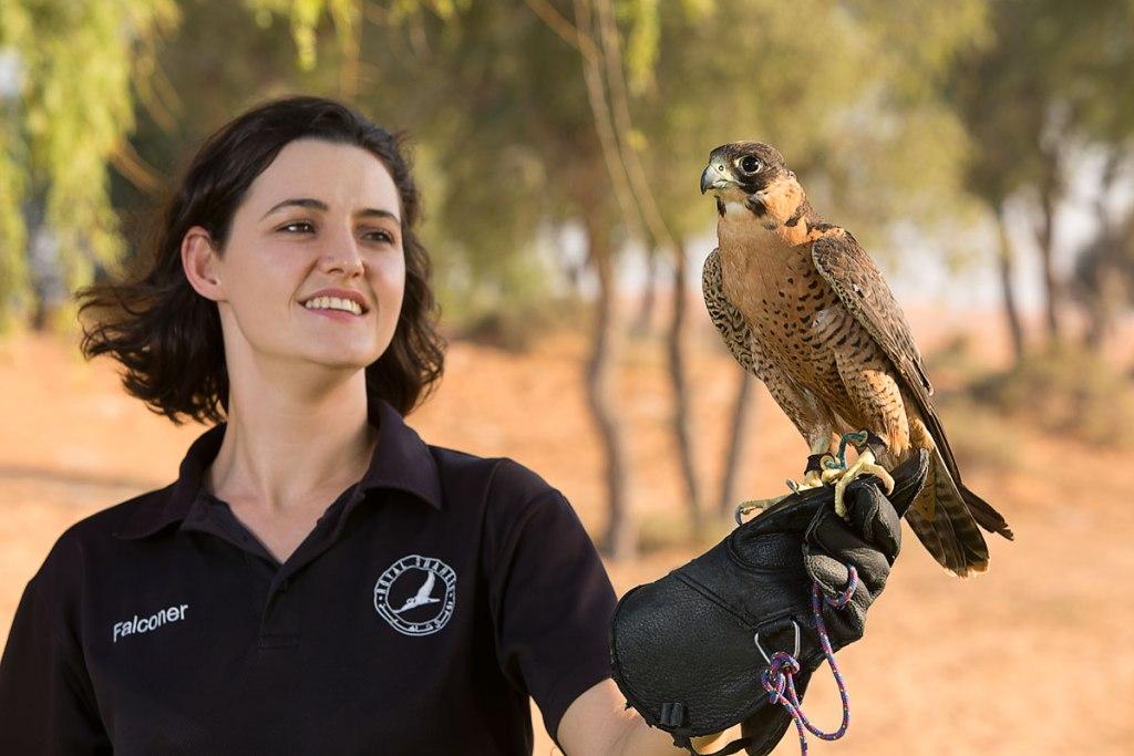 Falconry in Ras Al Khaimah UAE