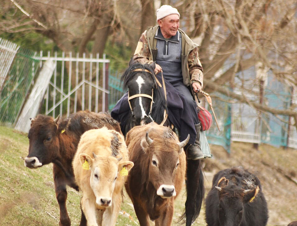 Ffestiniog Travel Kyrgyzstan - Mountains Lakes and Nomads