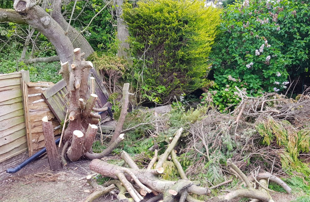 Fir tree pruned of branches with Samurai C-330-LH Pruning Saw