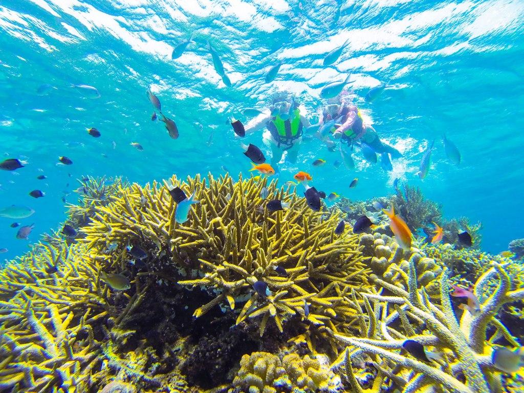 Snorkeling in the YaeYama Islands