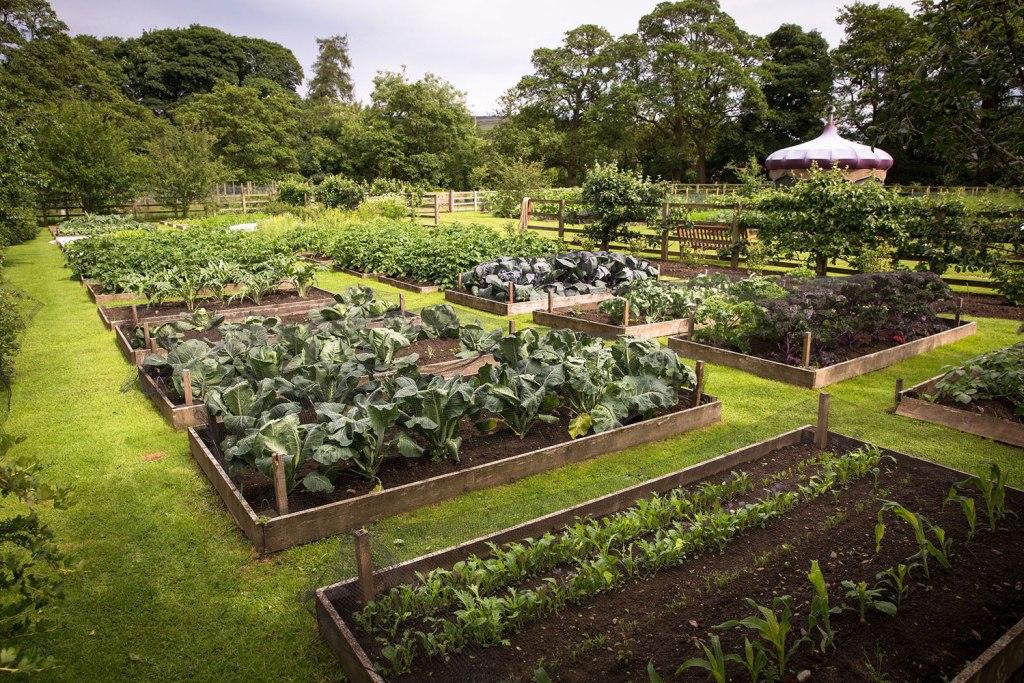 The Yorke Arms vegetable garden