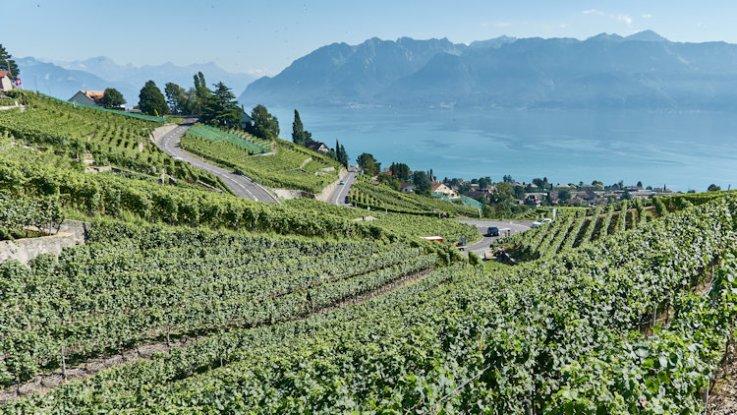 Vignobles en terrasses lausannois