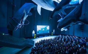 Ozeaneum als Spielort beim Darßer NaturfilmFestival