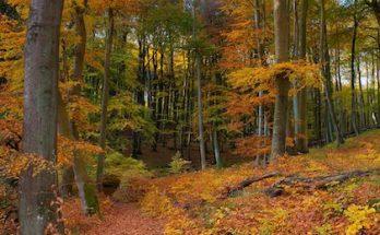 Herbstferien in Mecklenburg-Vorpommern